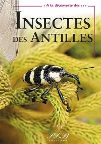 A la découverte des insectes des Antilles françaises