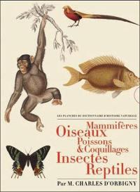 Les planches du Dictionnaire d'histoire naturelle