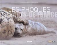 Les phoques en Hauts-de-France