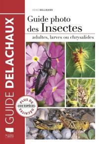 Guide photo des insectes