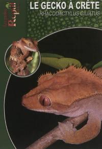 Le gecko à crête de Nouvelle-Calédonie