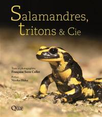 Salamandres, tritons & Cie