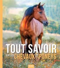 Tout savoir sur les chevaux et poneys
